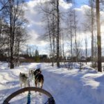 【DAY90・フィンランド】ロヴァニエミで念願の犬ぞりバウワウ!!