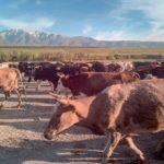 【DAY155・カザフスタン】ビシュケク〜タラズ〜シムケントへバス移動