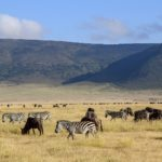 【DAY208・タンザニア】サファリツアー最終日🐘ンゴロンゴロ自然保護区は動物達の楽園!!