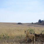 【DAY206・タンザニア】サファリツアー1日目🦁セレゲンティ国立公園を駆け巡る!!