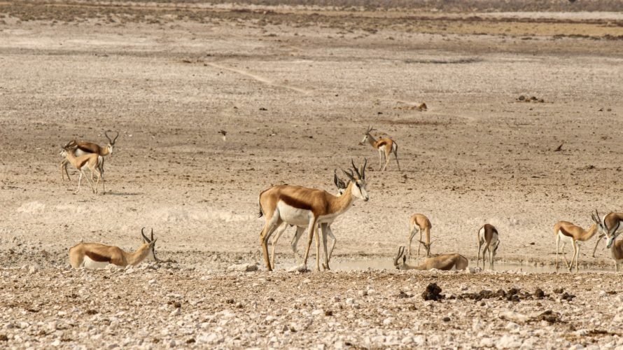 【DAY230・ナミビア】エトーシャで早朝サファリ🚐エトーシャ国立公園からウィントフックへ