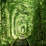 【DAY244・ウクライナ】ウクライナの絶景「愛のトンネル」へ🌳