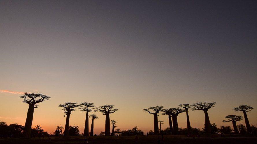 【DAY265・マダガスカル】バオバブ街道のサンセットは何度見ても絶景🌄
