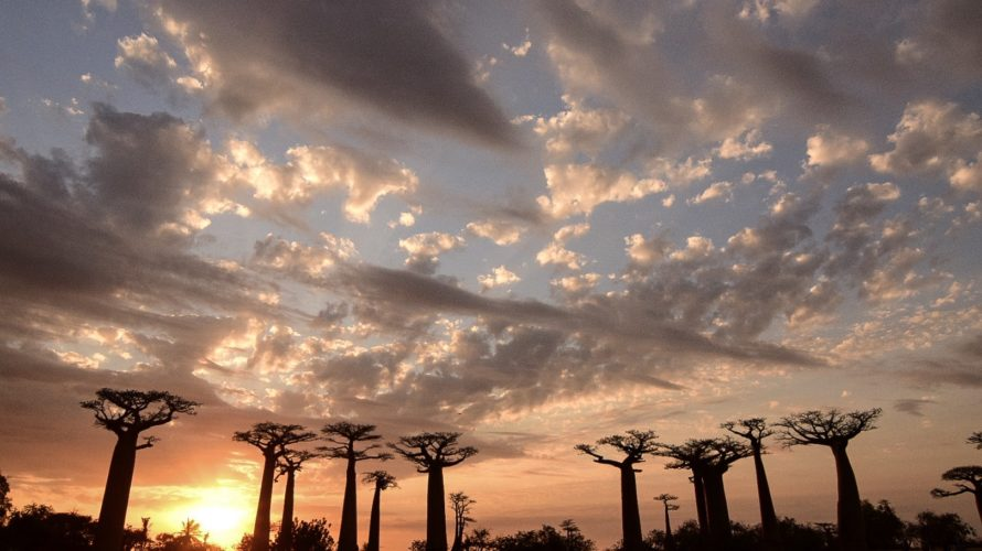 【DAY263・マダガスカル】バオバブ街道&キリンディ森林保護区ツアーの申し込み&夕方のバオバブ街道へ🌳