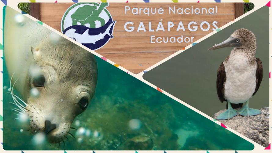 【エクアドル・ガラパゴス諸島】期間・ルート・費用・航空券情報まとめ