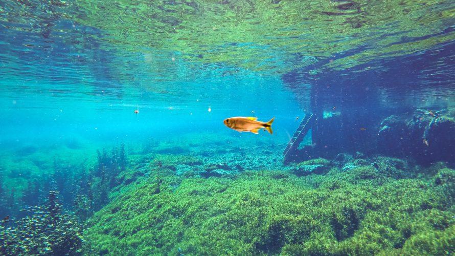 【DAY300・メキシコ】トゥルムの街からチャリでセノーテ巡り🚴♂️セノーテの水中世界は絶景だった