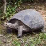 【DAY335・ガラパゴス諸島】アシカと一緒に泳ぐ&イサベラ島をさらっと散歩🐢