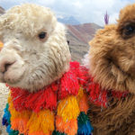 【DAY354・ペルー 】クスコから日帰りツアーで絶景「レインボーマウンテン」へ⛰
