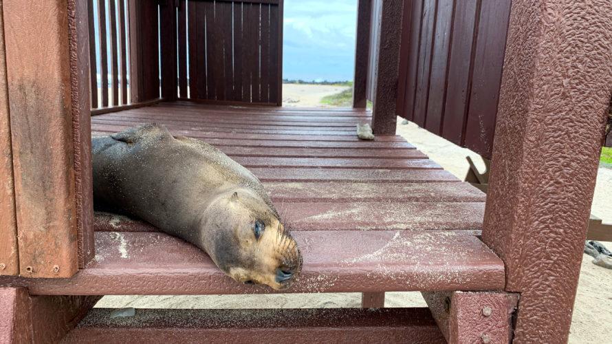 【DAY338・ガラパゴス諸島】サンクリストバル島のシュノーケリングポイントを巡る・・・🤿