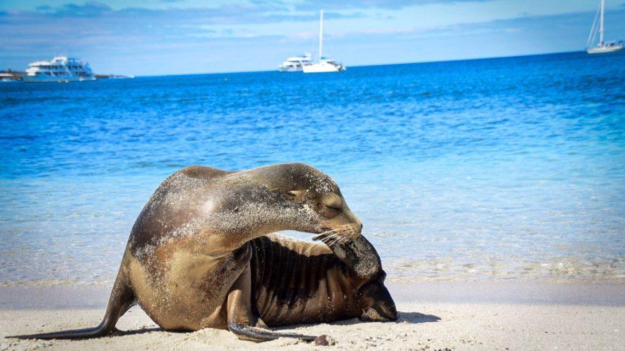 【DAY339・ガラパゴス諸島】本日もアシカと一緒に泳げず・・・
